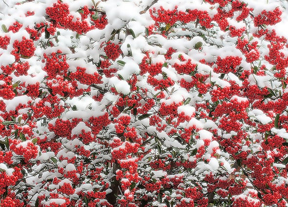 red winter wallpaper