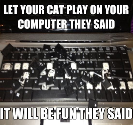 Funny photo of a laptop after a cat played on it