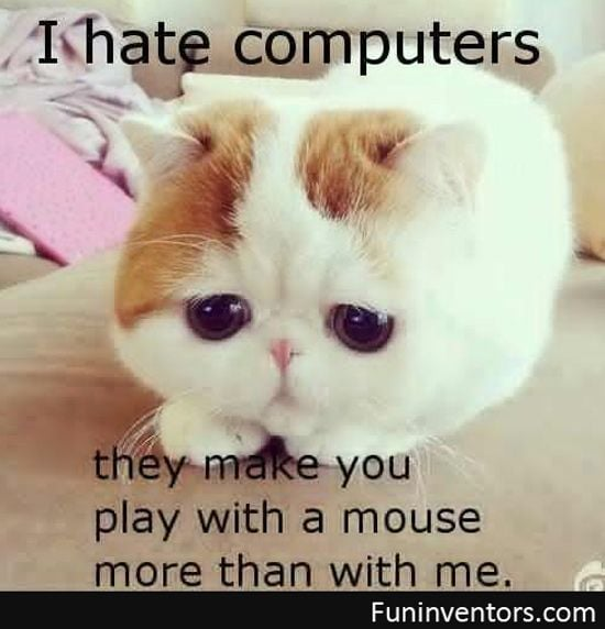 A kitten hates computers
