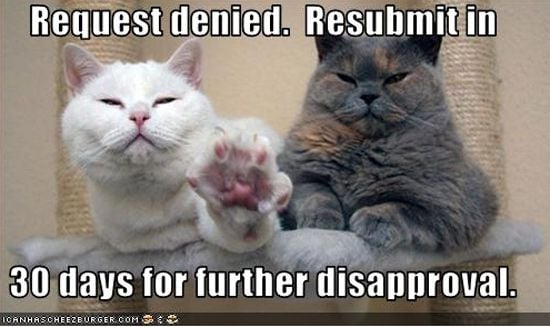 2 fluffy cats