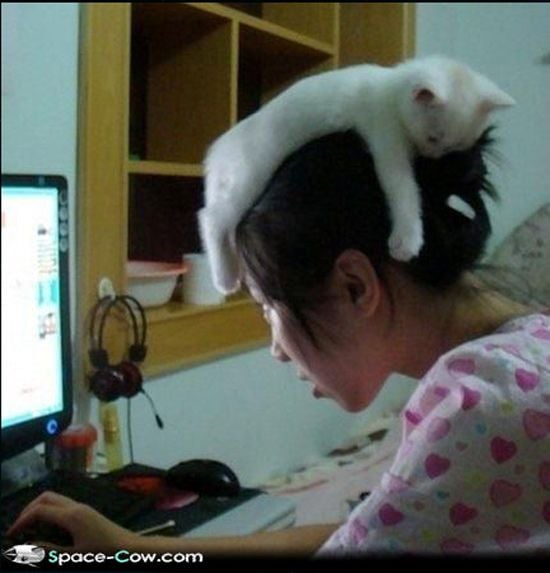 White Kitten Hat