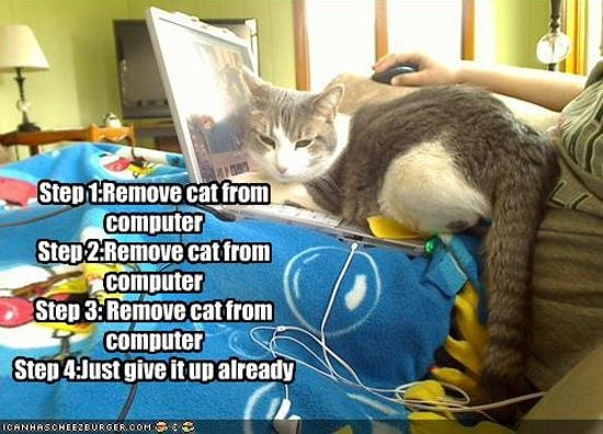Remove Cat from Computer