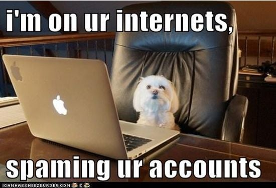 Dog on the web
