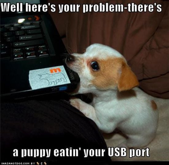 Puppy and USB Port