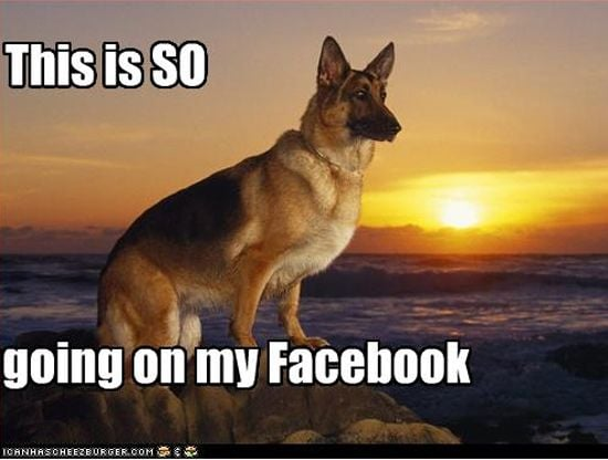 Dog photo for Facebook