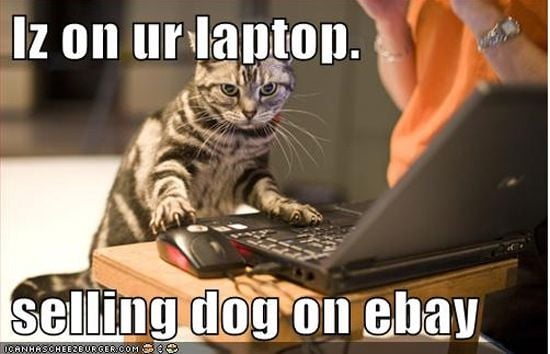 On Your Laptop