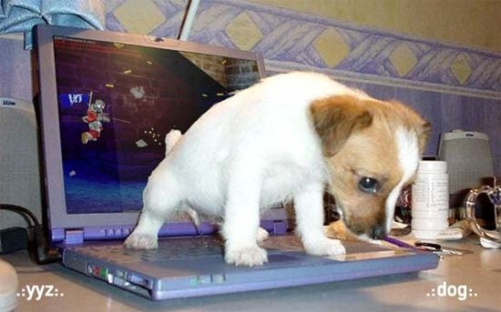 Puppy on a laptop