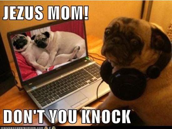 Dog at a computer