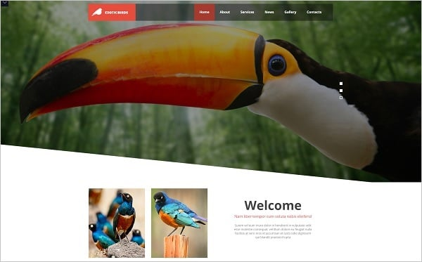 MotoCMS Promo - Bird Template