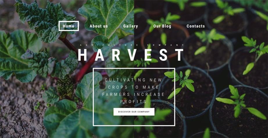 Harvest Website Template